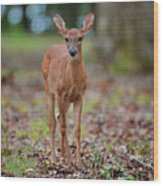 Fawn In Woods At Shiloh National Military Park Wood Print