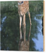 Fawn Reflection Wood Print