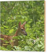 Fawn Relaxing Wood Print
