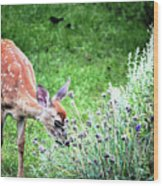 Fawn Visits Flowers Wood Print