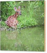 Fawn White Tailed Deer Wildlife Wood Print