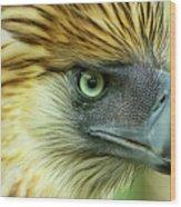 Fearless Philippine Eagle Wood Print