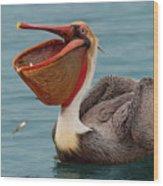 Feasting Brown Pelican  Wood Print