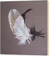 Feather And Shadow 1 Wood Print