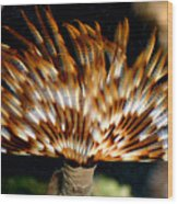 Feather Duster Wood Print