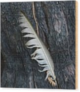 Feather In Burnt Tree Wood Print