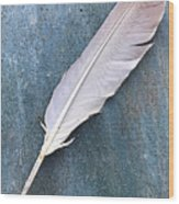 Feather Of A Dove Wood Print