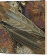 Featherdance Wood Print