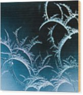 Feathered Frost Wood Print
