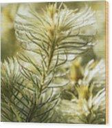 Featherheads Wood Print