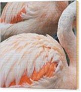 Feathers Of Flamingo Wood Print