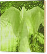 Feathers Of Light - Green Wood Print