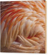 Feathers Of Pink Wood Print