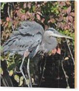 Feathers Ruffled Wood Print