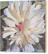 Feathery Flower Wood Print by Ken Powers