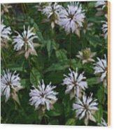 Feathery Petal Flowers Wood Print