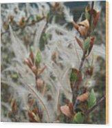 Feathery Styles Of Mountain Mahogany  Wood Print