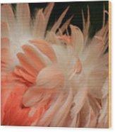 Featherz Wood Print