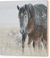 February Colt Wood Print