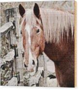 February Horse Portrait Wood Print