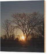 February Sunrise Behind Elm Tree Wood Print
