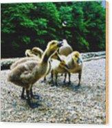 Feed Me Seymore - Baby Geese Wood Print