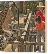 Feeding Giraffe 2 Wood Print