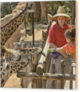 Feeding Giraffe 3a Wood Print