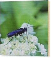 Feeding Insect Wood Print