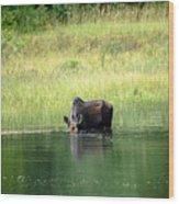 Feeding Moose Wood Print