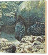 Feeding Sea Turtle Wood Print