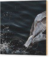 Feeding Seagull Wood Print