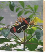 Feeding Time - Butterfly Wood Print