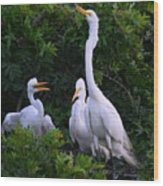 Feeding Time In The Great White Egret Rookery Wood Print