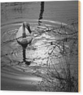 Feeding Trumpeter Swan In Black And White Wood Print