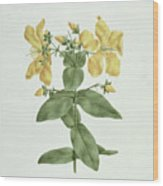 Feel-fetch - Hypericum Quartinianum Wood Print
