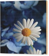 Feeling Blue Daisies Wood Print