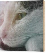 Feline Zen Wood Print