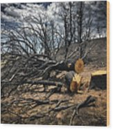 Felled After The Wildfire Wood Print