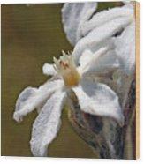 Felted Swamp Flower Wood Print