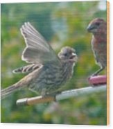 Female And Male Crossbills    August  Indiana Wood Print