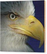 Female Bald Eagle Alaska Wood Print