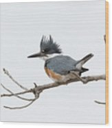 Female Belted Kingfisher On A Cloudy Day Wood Print