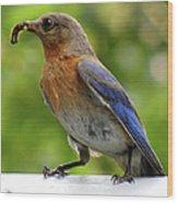 Female Bluebird Feeding Her Brood Wood Print