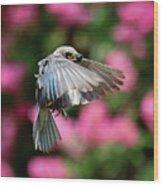 Female Bluebird In Flight Wood Print