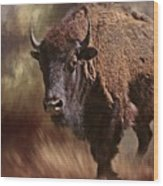 Female Buffalo Wood Print