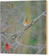 Female Cardinal And Friends Wood Print
