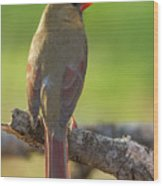 Female Cardinal Wood Print