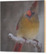 Female Cardinal In The Winter Wood Print