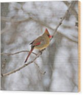 Female Cardinal In Winter Wood Print
